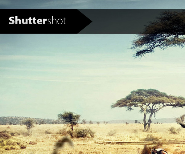 shuttershot wordpress theme